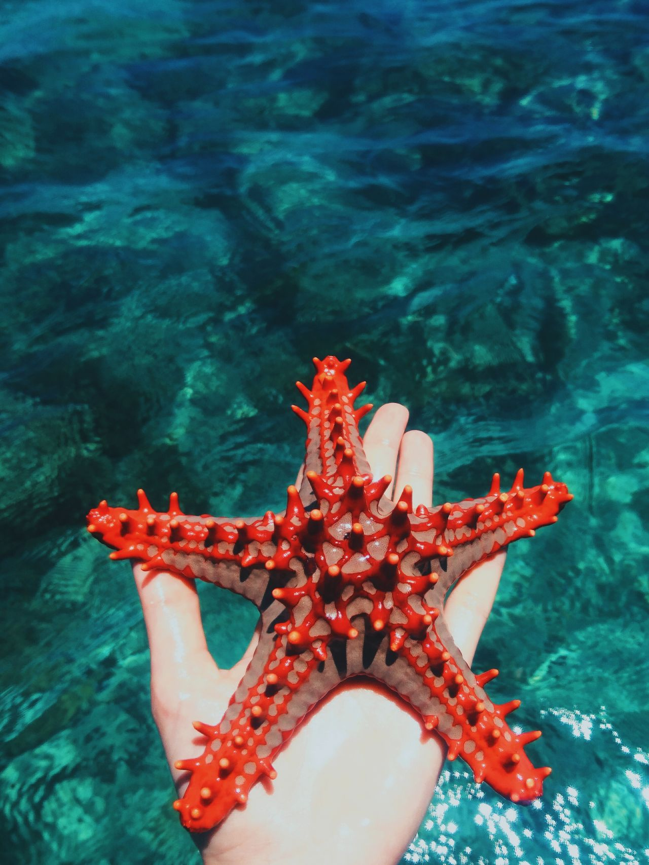 Water Sea Life Starfish  Underwater Beauty In Nature Nature Close-up Ocean Adventure VSCO Kenya EyeEm Best Edits Africa EyeEm Best Shots Travel Travel Destinations Minimal