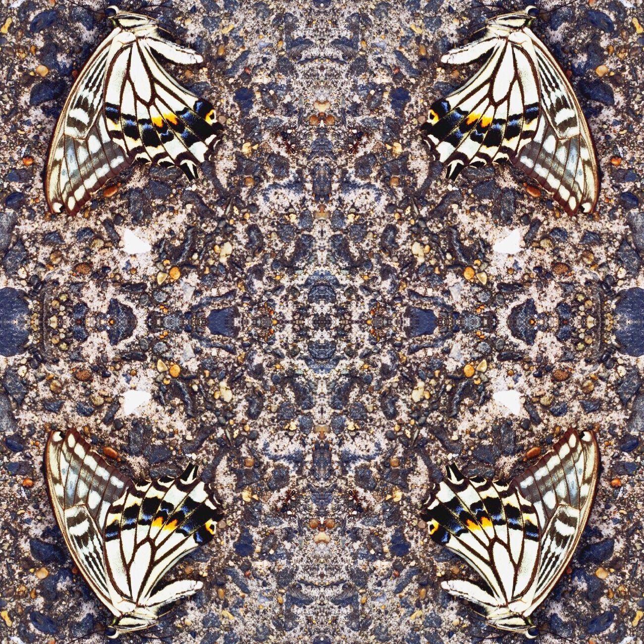Butterfly Asfalto Ageha
