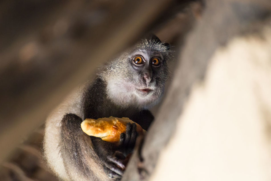 Beautiful stock photos of animals,  Animal Themes,  Animal Wildlife,  Animals In The Wild,  Bread
