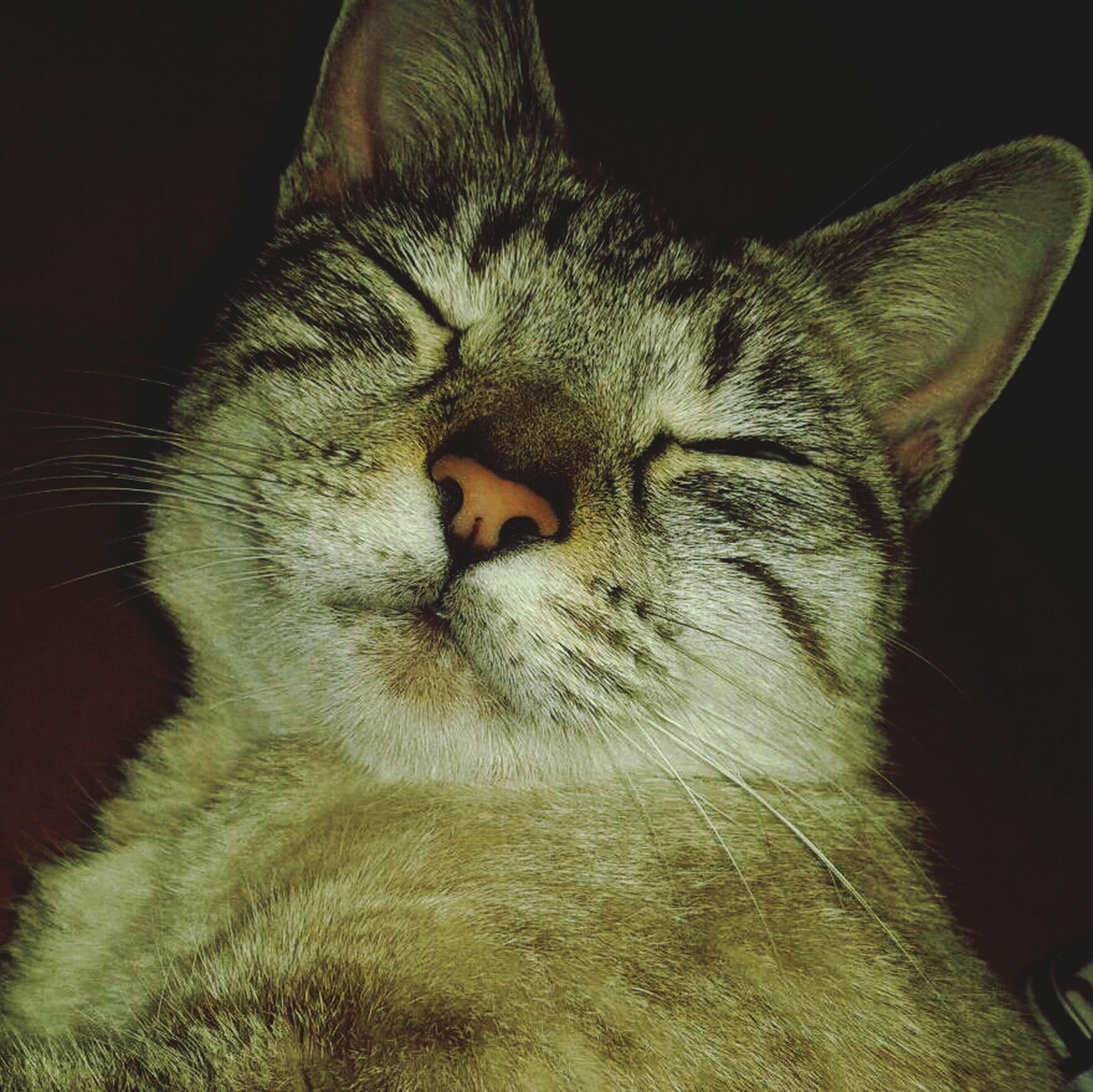 q chula mi mininaaa Cat Photos Enjoying Life Gatos Adorable Friends