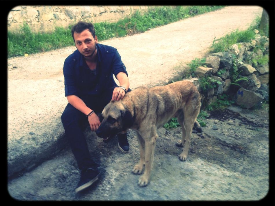 Dog Kangal Cesur