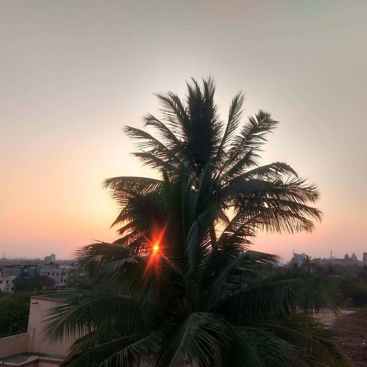 palm tree, tree, sunset, beauty in nature, sky, scenics, nature, tranquil scene, outdoors, tranquility, growth, no people, clear sky, day