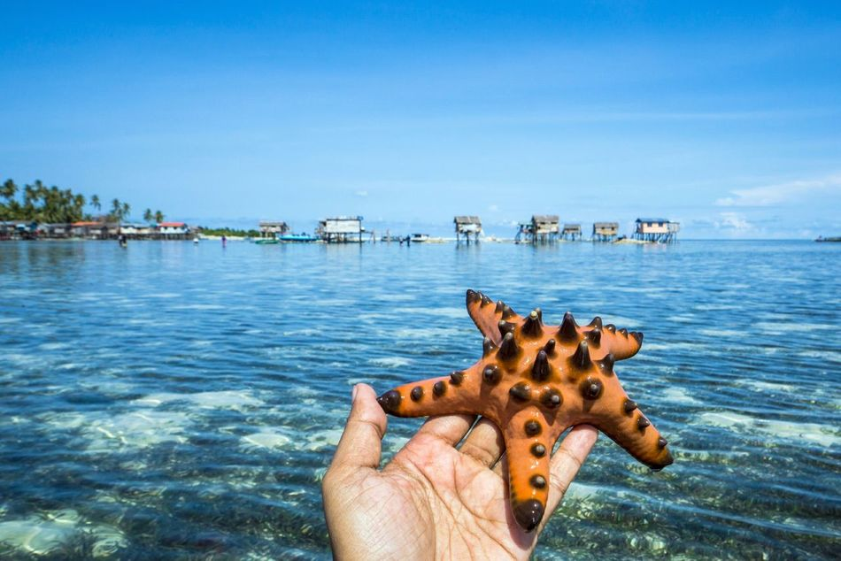 Beautiful stock photos of starfish, Beach, Cropped, Day, Holding