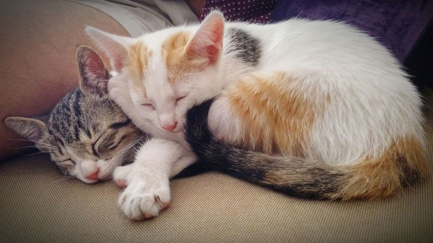 Pets Domestic Animals Domestic Cat Indoors  Relaxation Cat Sleeping Resting Feline Animal At Home Calm