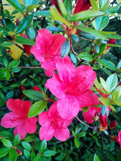 Leaf Growth Flower Close-up Freshness Plant Pink Color Fragility Beauty In Nature Nature Petal Green In Bloom Day Springtime Green Color Flower Head Outdoors Pink Softness