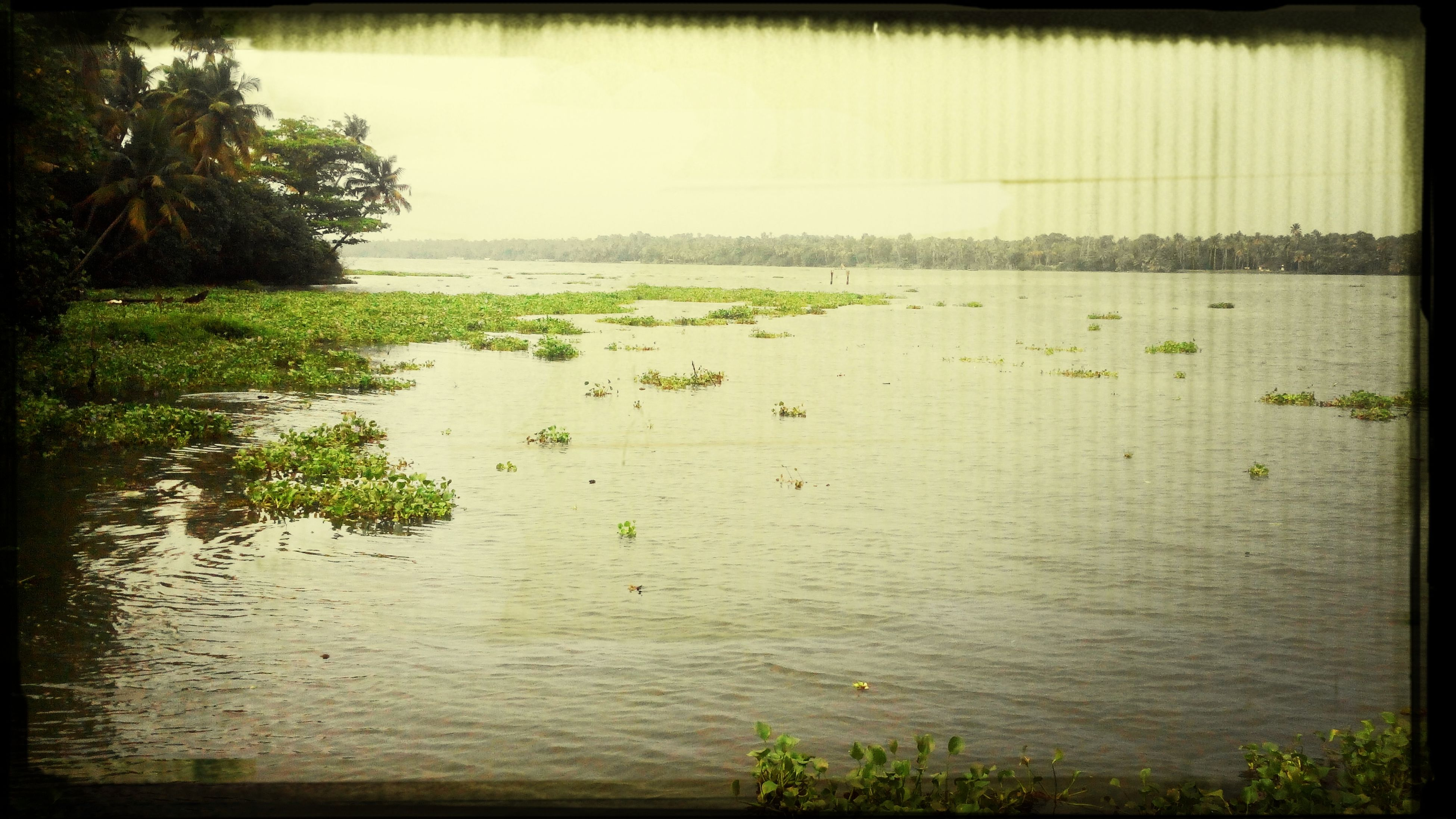 water, transfer print, tranquil scene, tranquility, sea, scenics, horizon over water, tree, auto post production filter, nature, beach, beauty in nature, clear sky, growth, shore, sky, plant, sand, day, idyllic