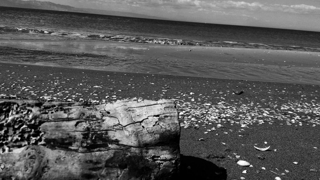 Sand & Sea Tree Trunk Trunk Detail Trunk In The Water Beach Time Sand Beach Sand And Sea Taking Pictures Beach Photography Seaside Beach Sea And Sky Black And White