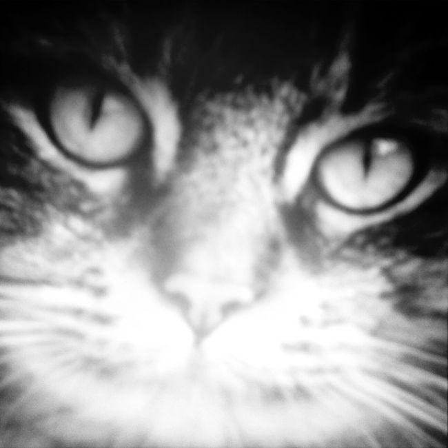 my little kitty , Jace :3 Love Kitty Eyes <3