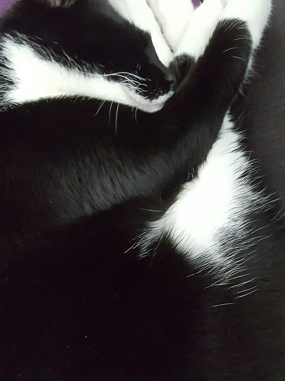 pets, domestic animals, one animal, animal themes, domestic cat, mammal, cat, indoors, feline, close-up, no people, day