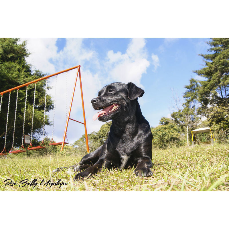 Dog Domestic Animals Pets Animal Themes Looking Away Sky Animal Perra Fox Terrier Chileno Fox Terrier  Negro Black Sky And Clouds Sky Cloud