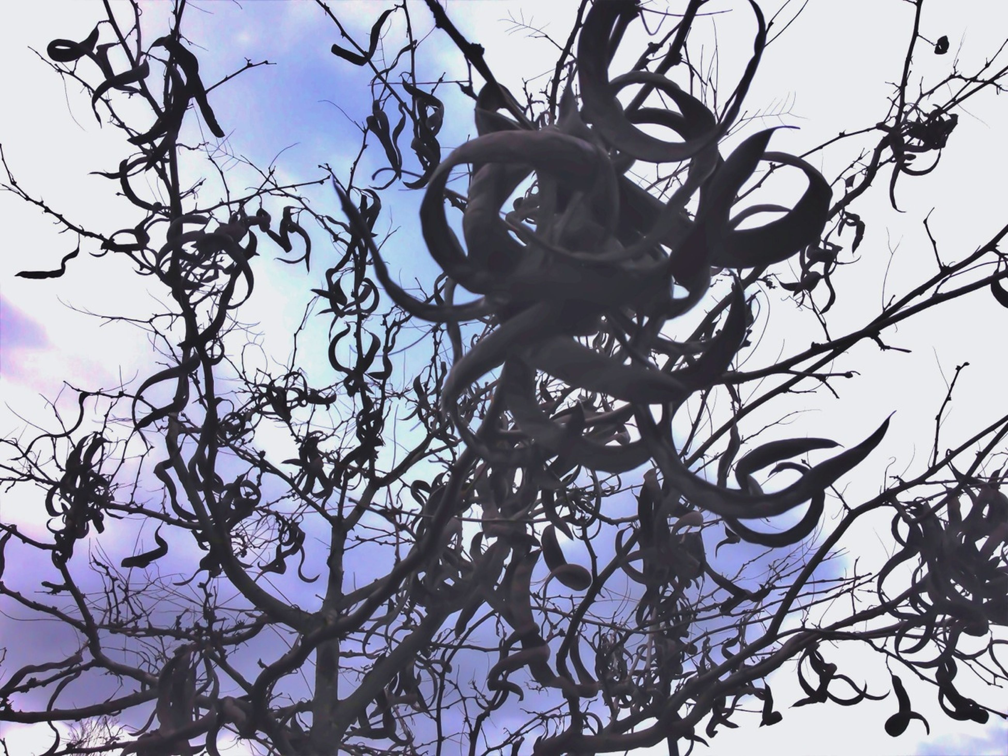 Twirling tree against a swirling sky.