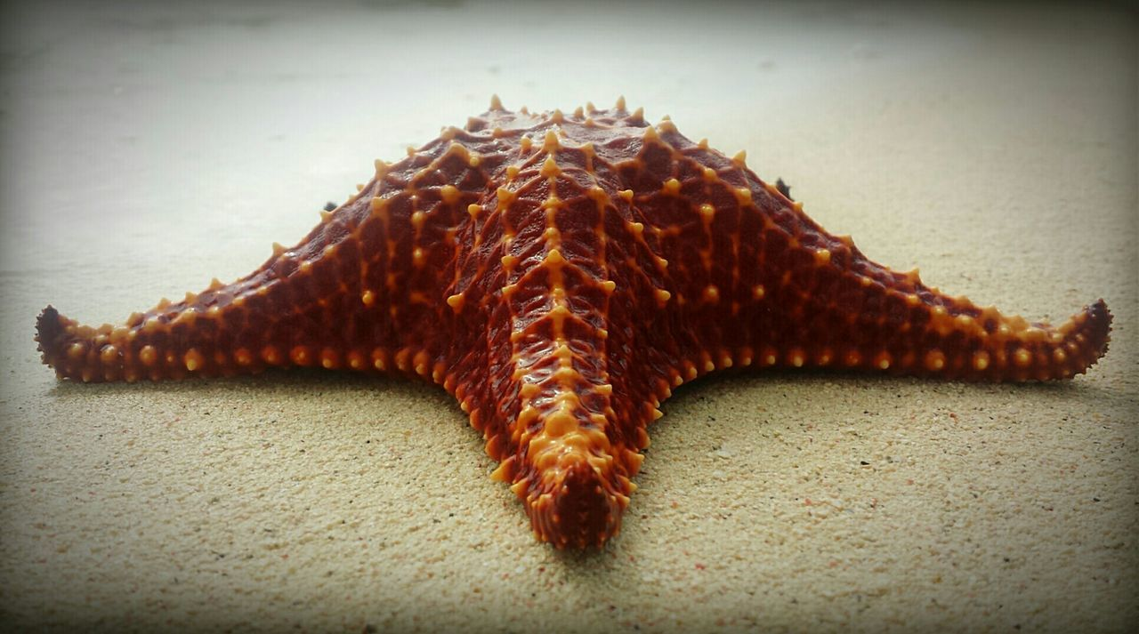 Beautiful stock photos of bahamas, Animal Themes, Beach, Close-Up, Day