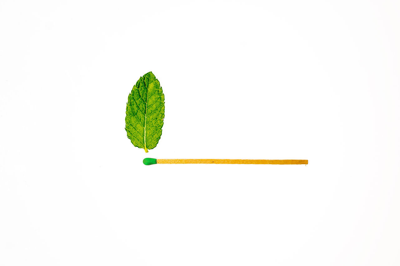 Green ist the answer Alternative Energy Fire Flame Freshness Green Green Color Mint Visual Feast White Background