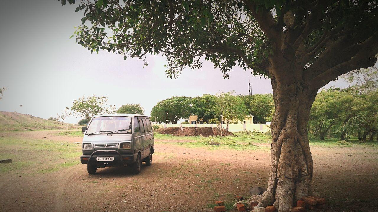 Car Sperow Bird Vivek Teraiya Vivek Photography Vicky Teraiya Bagasara Nature Tree Car