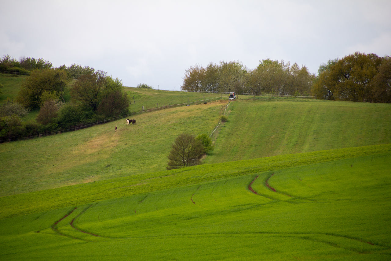 Agricultural Land Agriculture Animal Themes Animals Bushes Colour Domestic Animals Field Fields Grass Green Color Growth Growth Hills Horses Landscape Nature Outdoors Plants Rural Scene Scenics Springtime Traces Tranquility Trees