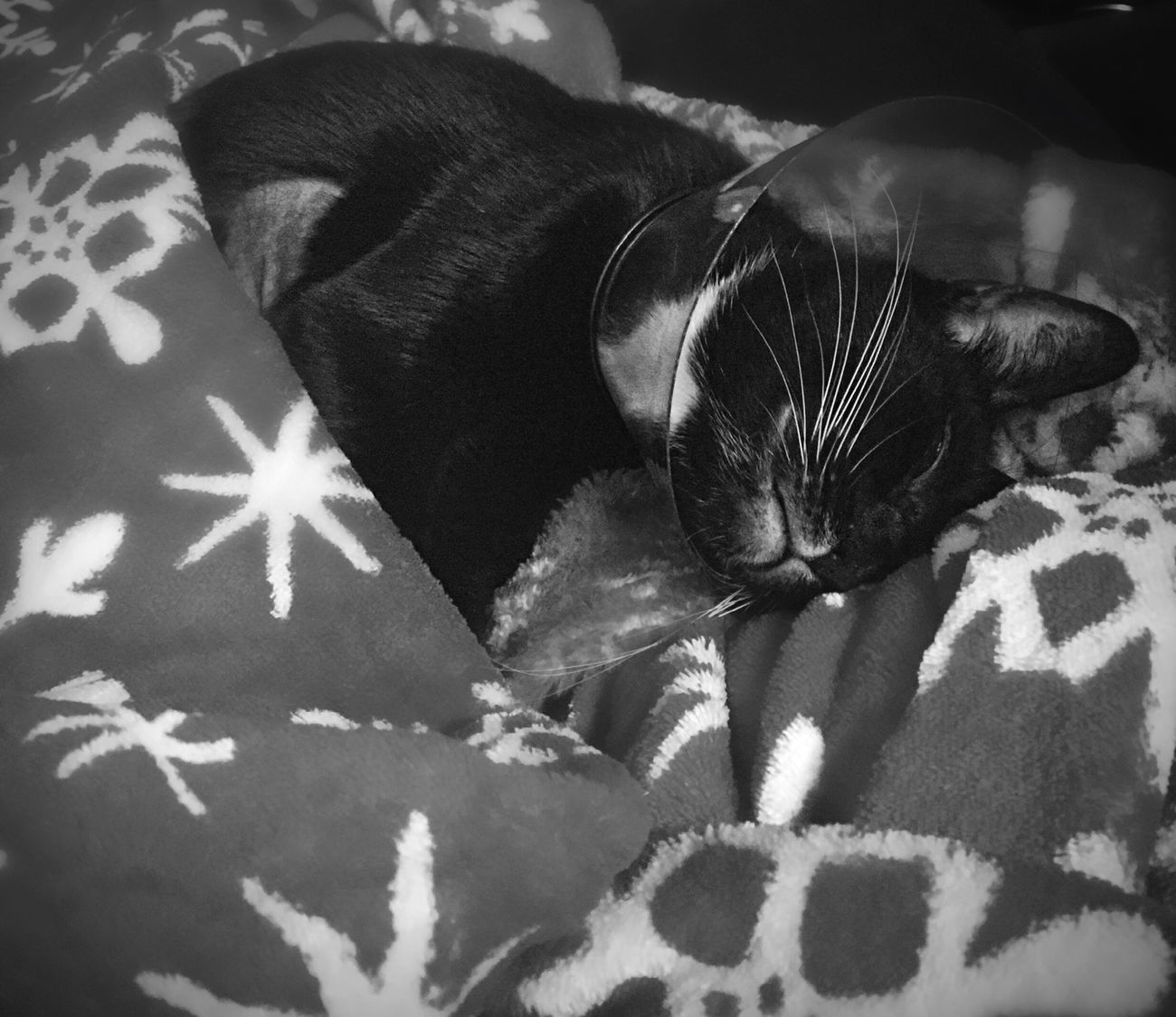 Sometimes you just need to cuddle with your mom (especially after surgery). Furbabymama Furbaby Sleeping Cat Blackandwhite