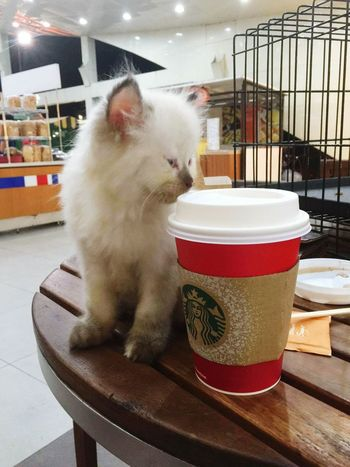 Who doesnt love coffee? And cats?