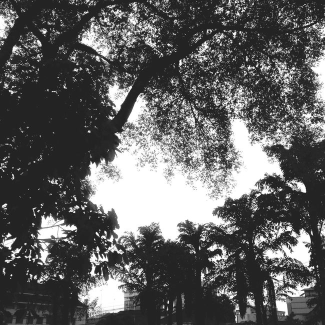 Black&white Nature_collection Street Iphonesia Alone Time Shotoftheday