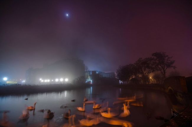 Fog Swan Dance | it's finally Friday good people!! Enjoy your weekend ;) Check This Out EyeEm Nature Lover Water_collection Nightphotography Long Exposure Eye4photography  EyeEm Masterclass EyeEmBestPics EyeEm Best Shots Nature_collection