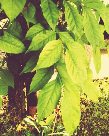 Nature Likepls Likeforlike Followme Followforfollow Needfollowers Needfollowers #new Needfollows Itwasraining NotTheBest Itrymybest Tree Leaves🌿 Itsgreen EyeEm Nature Lover EyeEm Gallery Can i get 15 followers?😃📷📱Anyway thanks for this 10 followers😃😃😉