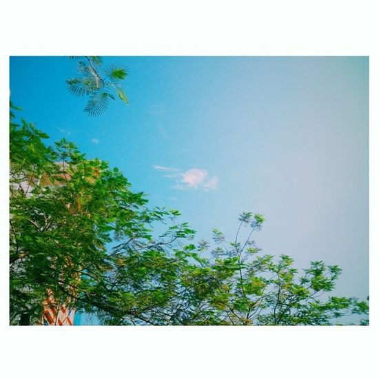 Summer time .... Summer Sky Hoaphuong Tree clouds