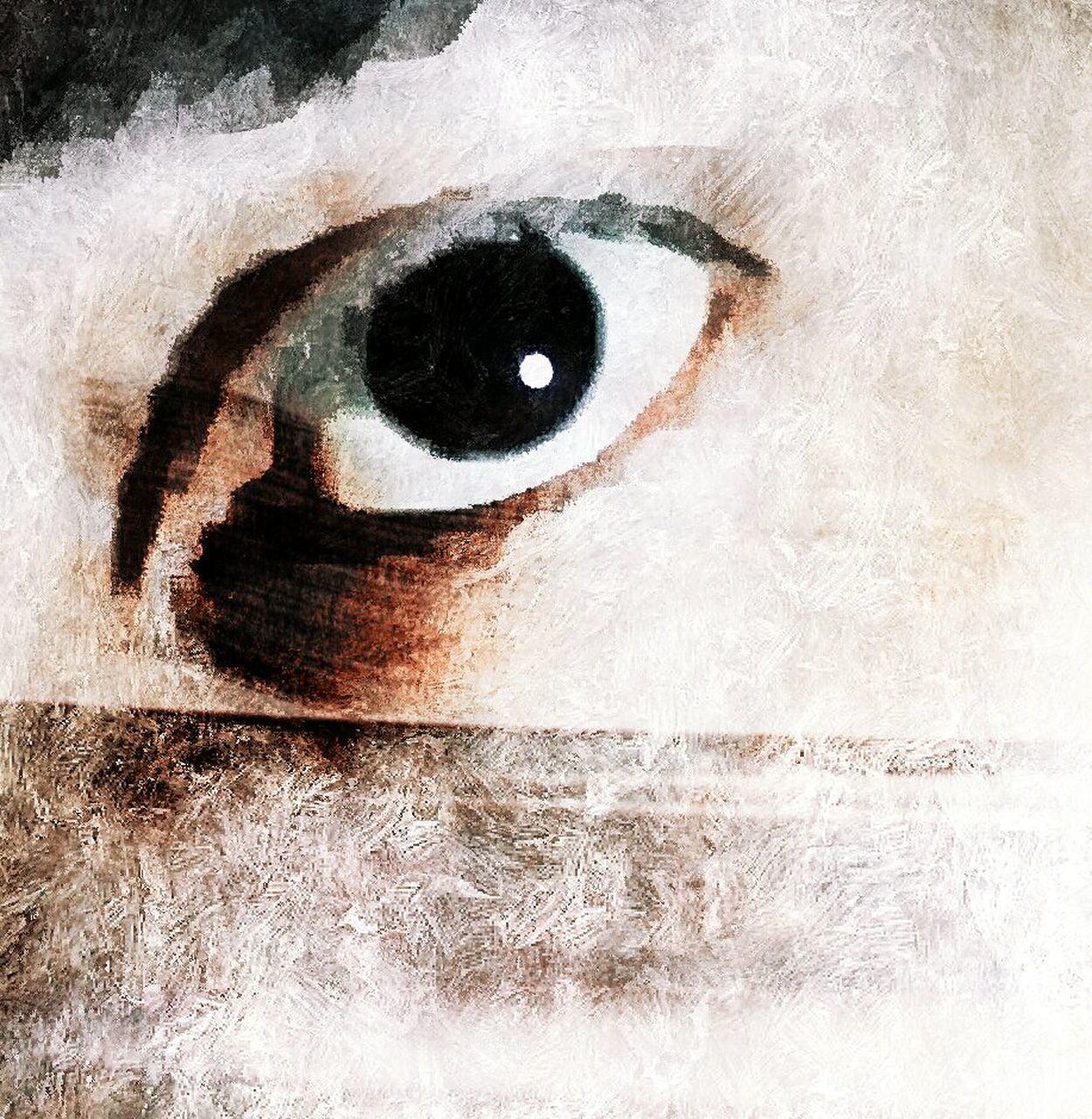 human eye, looking at camera, human body part, close-up, portrait, eyeball, indoors, day, animal themes, eyelash, mammal, people