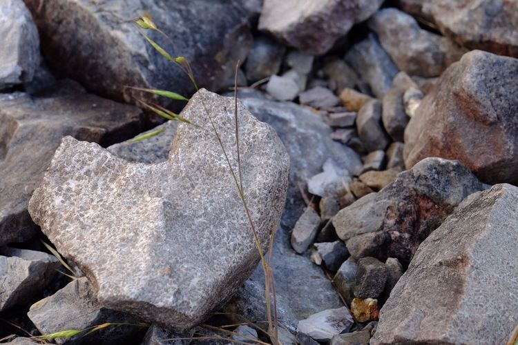 Rock - Object Nature No People Outdoors Close-up Day Beauty In Nature Heart Shape Heart Shape Rock