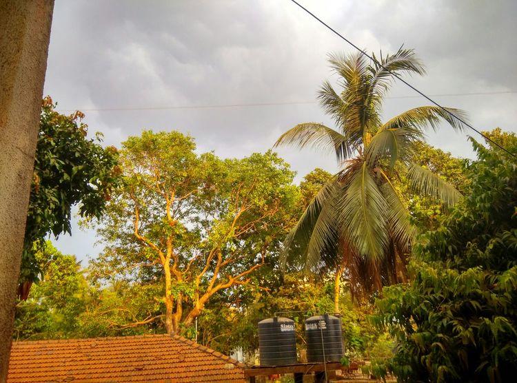 Green Nature EyeEm Nature Lover Hugging A Tree Hdr Edit EyeEm Best Edits Rainy Days Autumn Colors