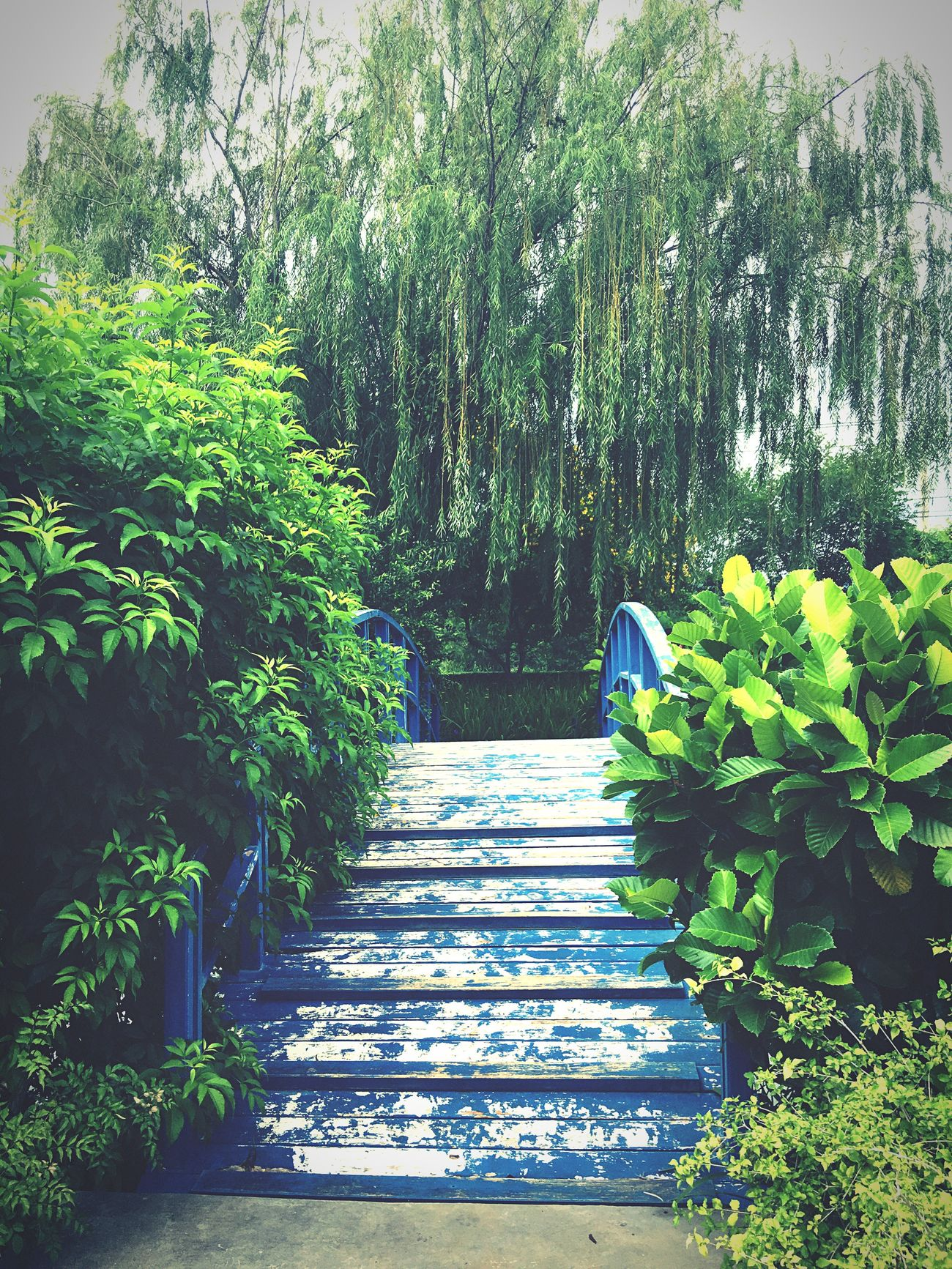 Garden Landscape Green Color Blue Fresh And Clean Kaoyai Thailand