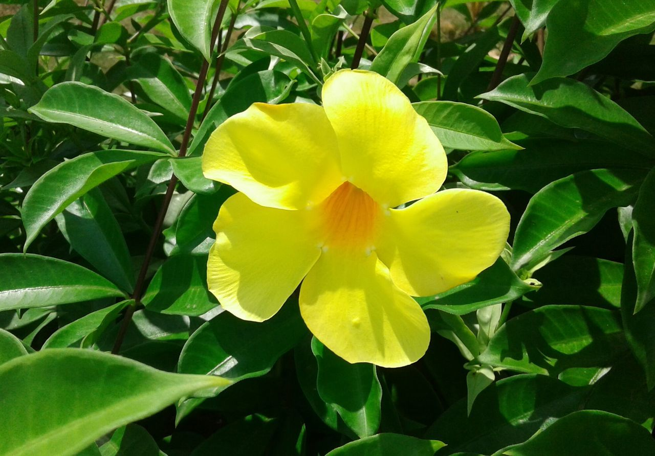 flower, petal, beauty in nature, growth, fragility, nature, freshness, leaf, plant, flower head, yellow, blooming, green color, outdoors, no people, day, close-up