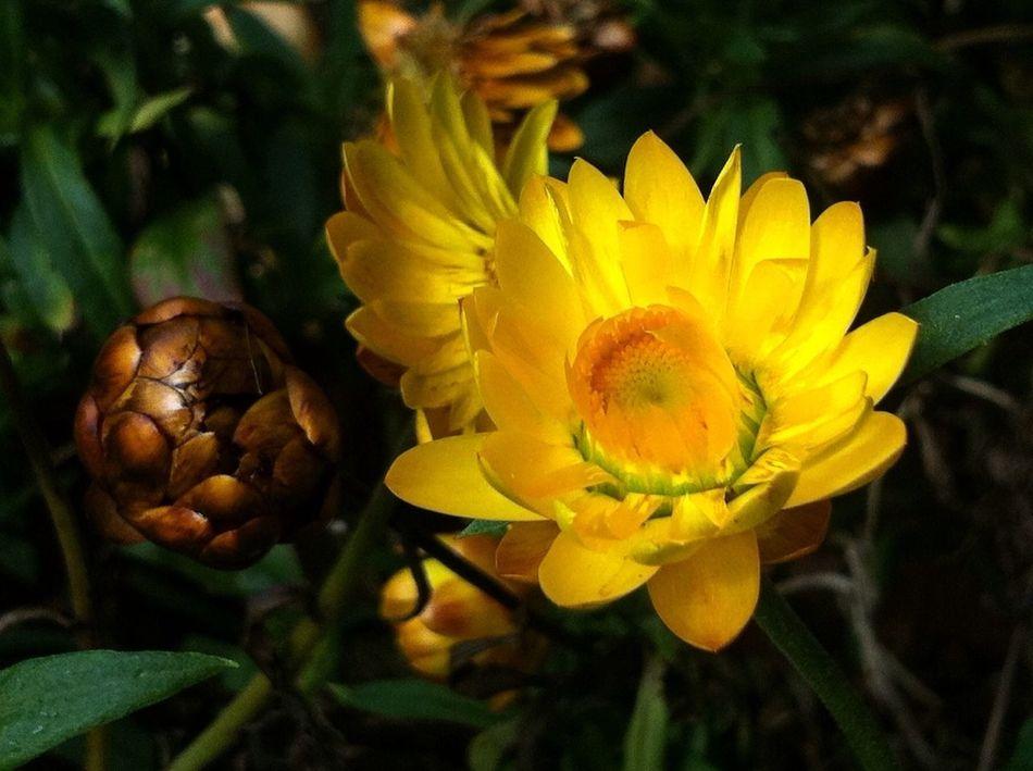 Planten Un Blomen Mystic Flowers Creative Light And Shadow Magic Darkness And Light Nature Photography Flower Photography Jopesfotos - Nature Jopesfotos - Bestefotos