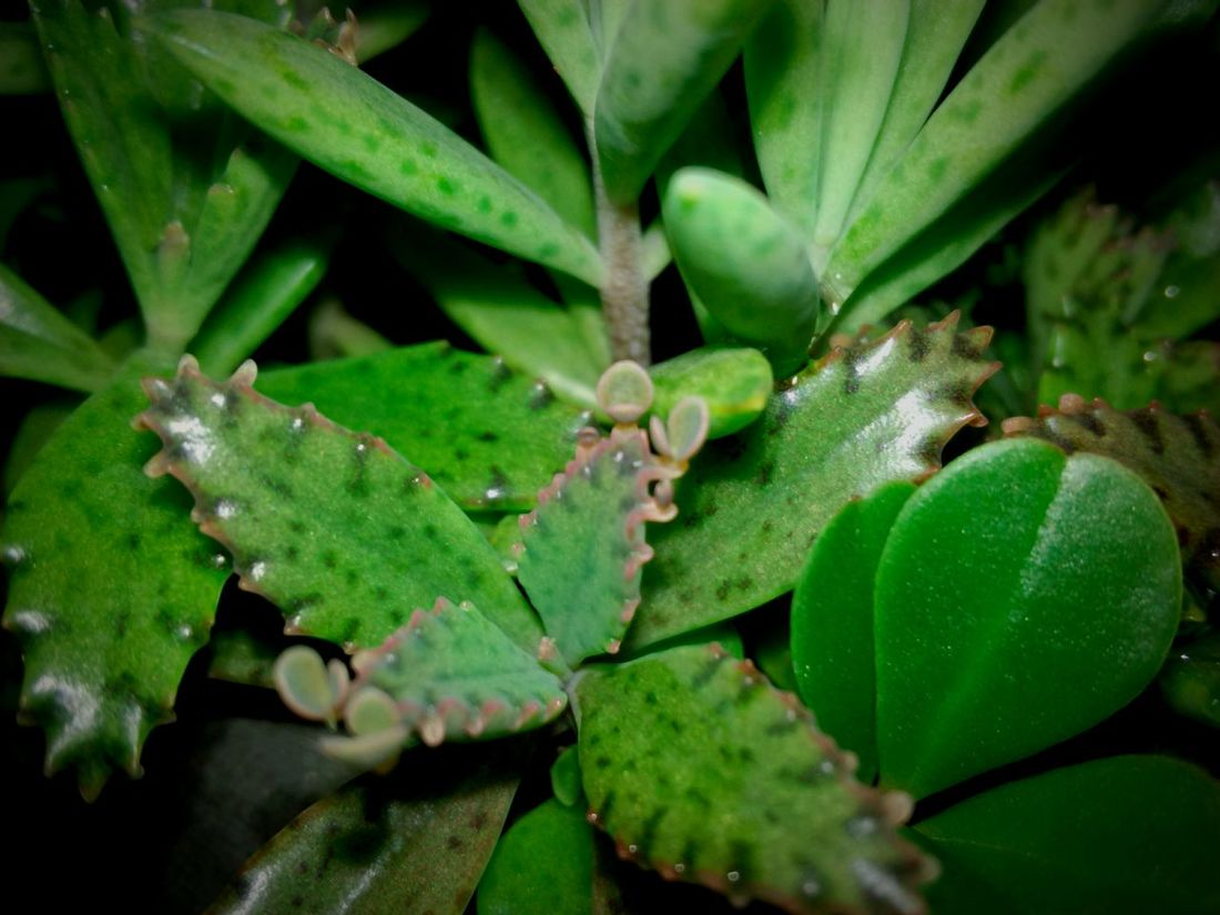 Nature Plant Beauty In Nature Green Color Leaf Close-up Growth Selective Focus Night Focus On Foreground Nature In The Night Huawei Shots Huawei Y5