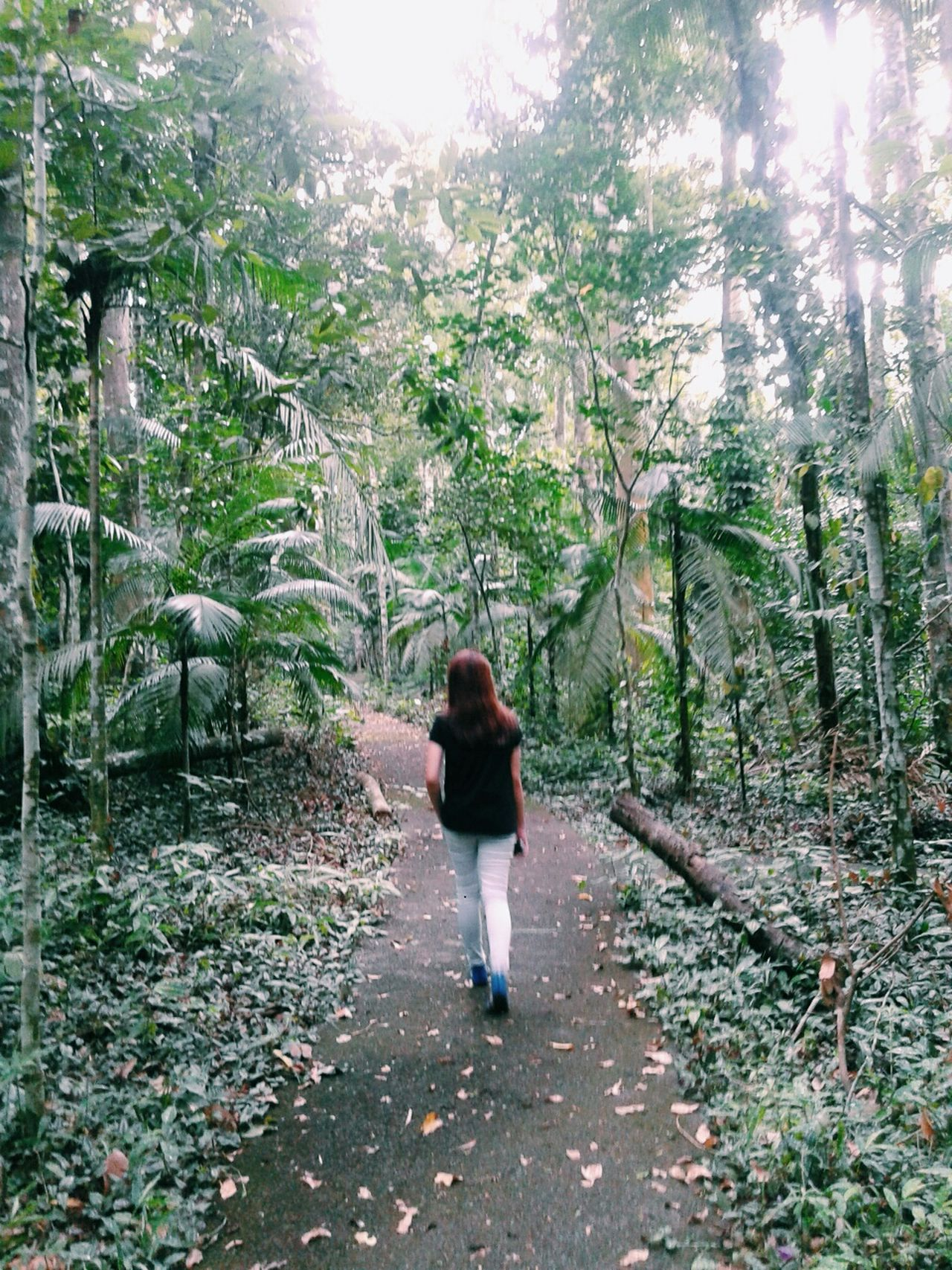 Mt. Makiling MakilingBotanicGarden Vscocam VSCOPH EyeEm Nature Lover Eyeem Philippines Travel Photography Nature_collection Mountain_collection In The Forest