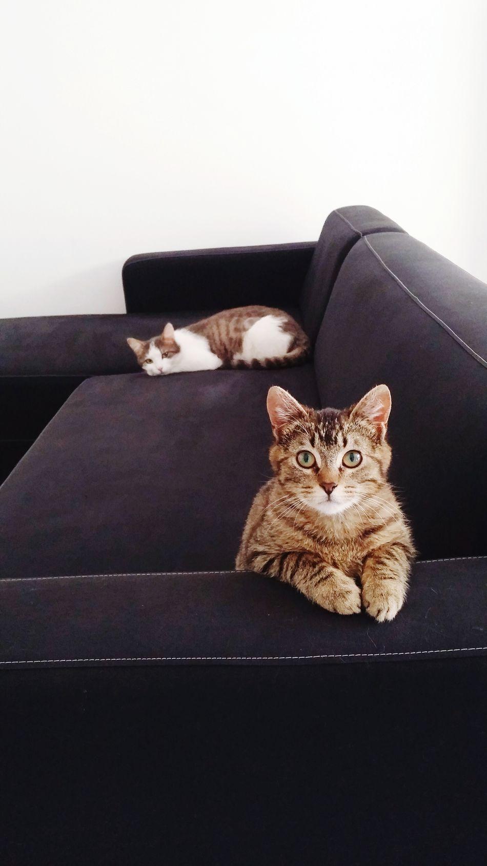 Neko neko ^^ Cats 🐱 Cat Eyes Cat Lovers Cat Cats Cats Of EyeEm Chat Adorable Cat  Adorable Cute Cute Pets Cute Cats (>^ω^<) Pet Cute Cat