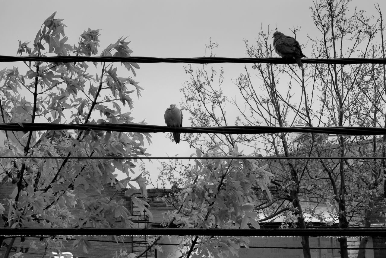 bird, animal themes, animals in the wild, perching, animal wildlife, low angle view, one animal, crow, tree, outdoors, no people, nature, silhouette, day, raven - bird, sparrow, bird of prey, spread wings, sky