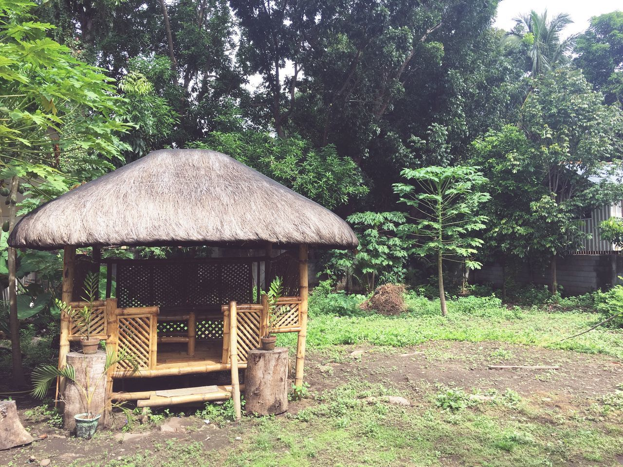 The little cottage we made. Cottage View Cottage Filipino Cottages Camiguin Island Camiguin Philippines Nature Home Homemade Tree Growth Outdoors Nature Thatched Roof No People Green Color Plant Day Grass Beauty In Nature Building Exterior Built Structure Architecture