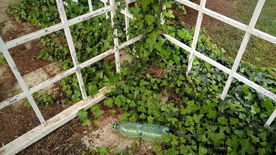 Ruined Building Old Nightclub Plants 🌱 Old Bottle