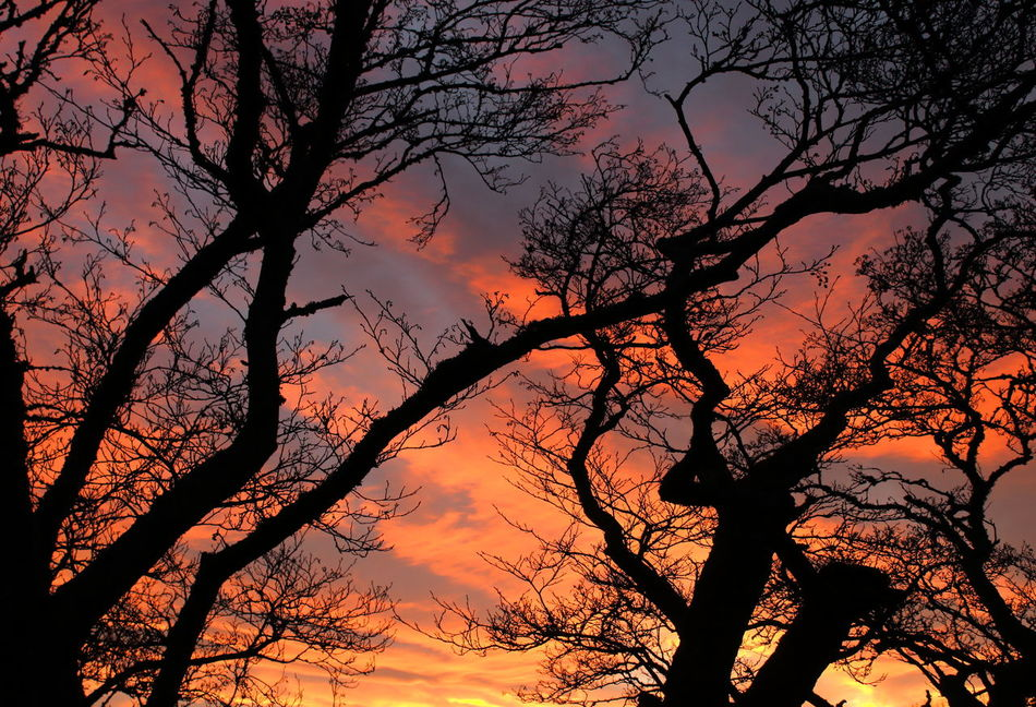 The boy stood on the burning deck, Whence all but he had fled Beauty In Nature Burnt Silhouette Close-up Cloud - Sky Dramatic Sky Fiery Sunset Fire Growth Nature No People Orange Color Outdoors Scenics Silhouette Sky Sky And Clouds Sunset Tree Twighlight Twighlight Through The Trees
