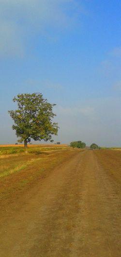 Walnut Tree Autumn🍁🍁🍁 Clear Sky Countryside Field Golden Fields Tranquility