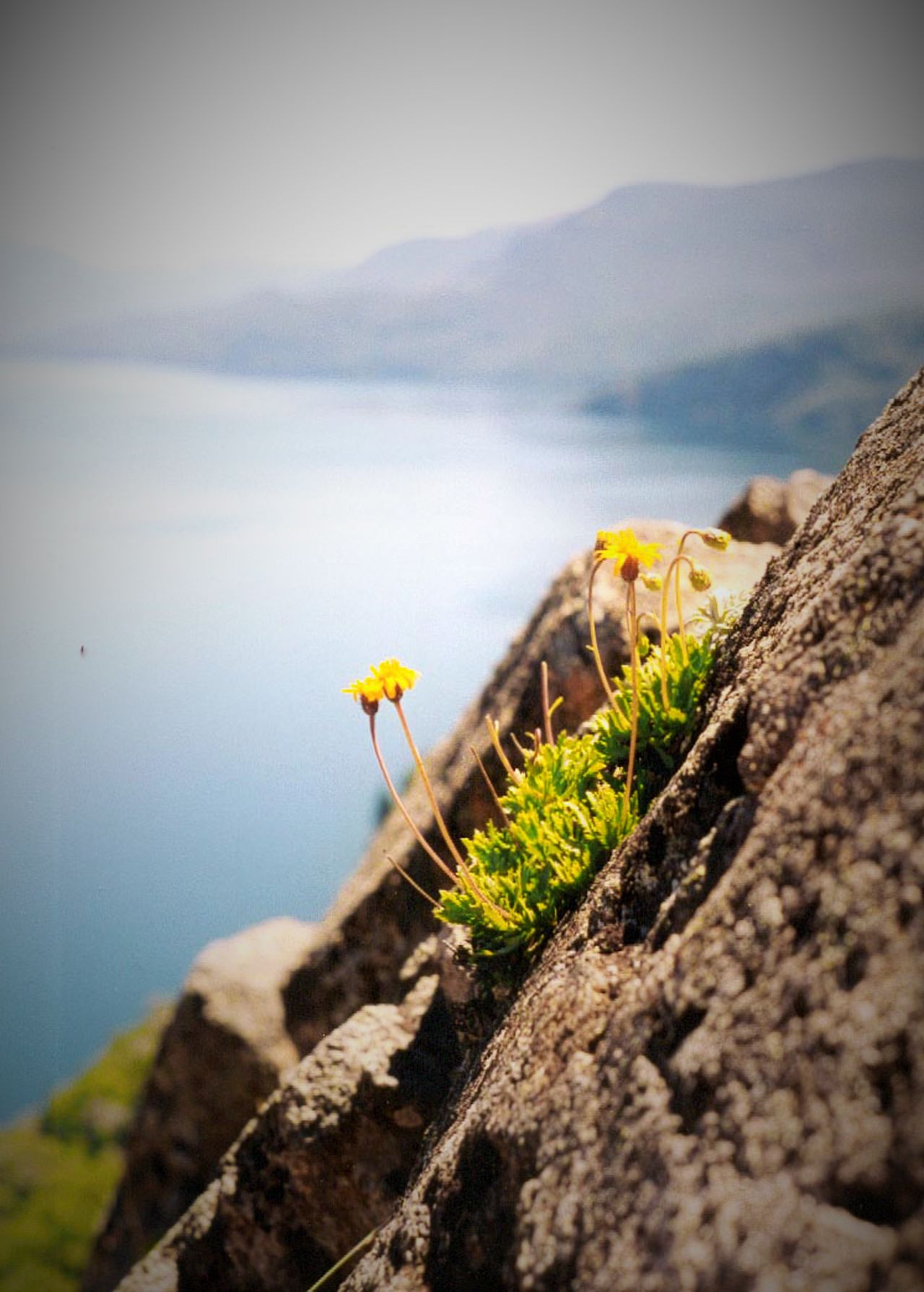 Beauty In Nature Close-up Growing Mountain And Flower Selective Focus Tranquility Yellowflowers The Great Outdoors - 2017 EyeEm Awards