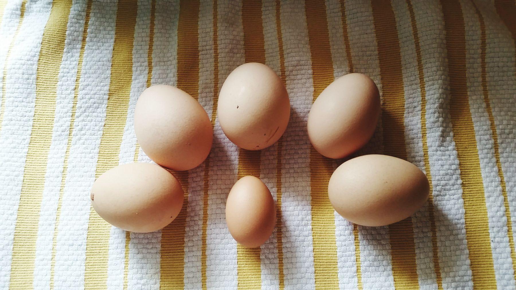 FRESHEGGS Babyegg Backyardchickens