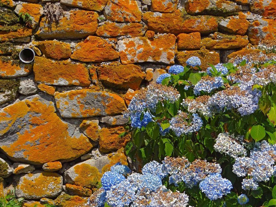 La beauté du temps qui passe sur les murs du village Wall Time Beautiful Nature Flowers Limousin Creuse France