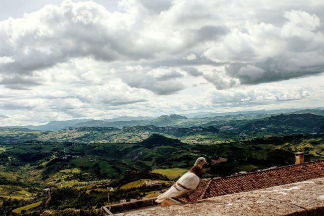 San Marino,italy Travelling Travelling Photography Destination Thehappynow From My Point Of View From Where I Stand View From Above Pigeon Priceless Fine Art Photography