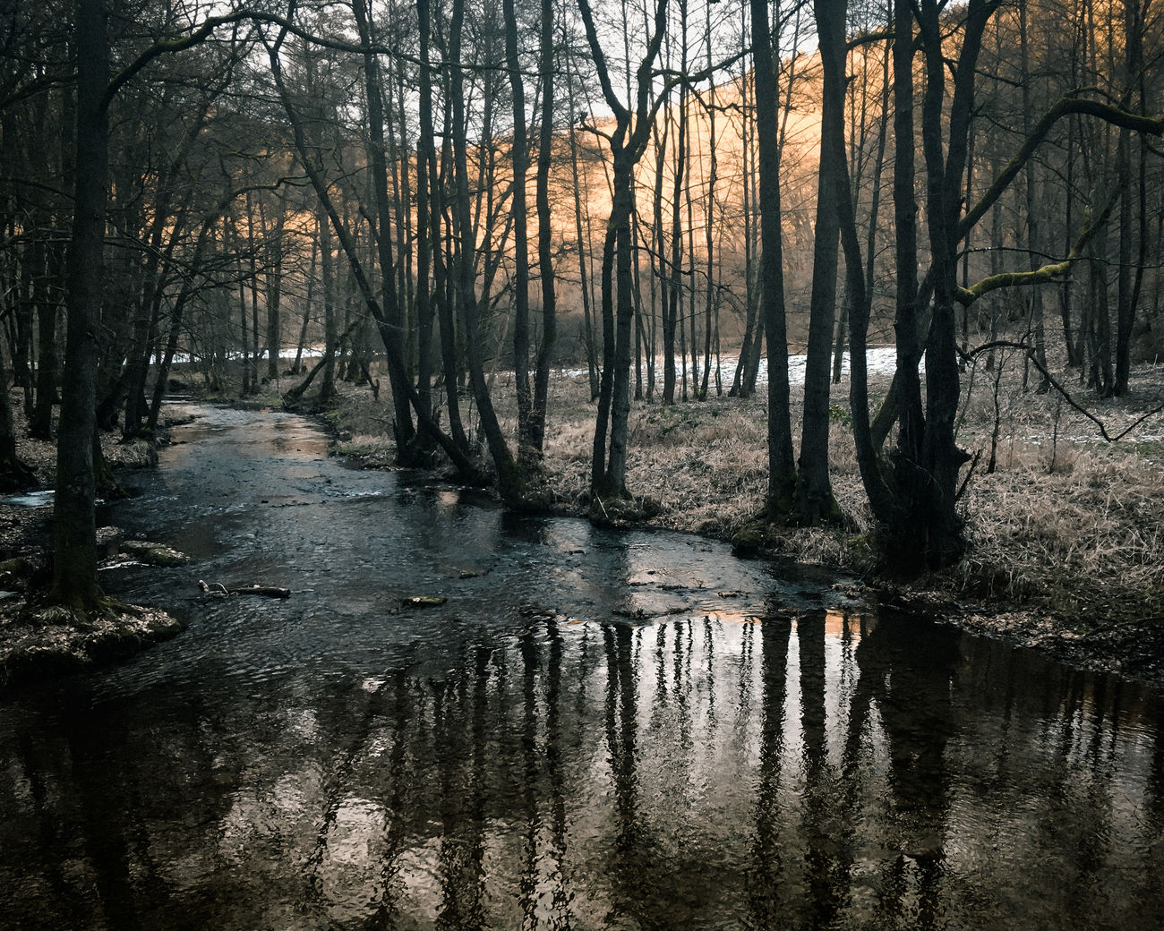Beauty In Nature Creek Forest Nature No People Outdoors Iphonese Stream Tranquility Trees And Nature Water