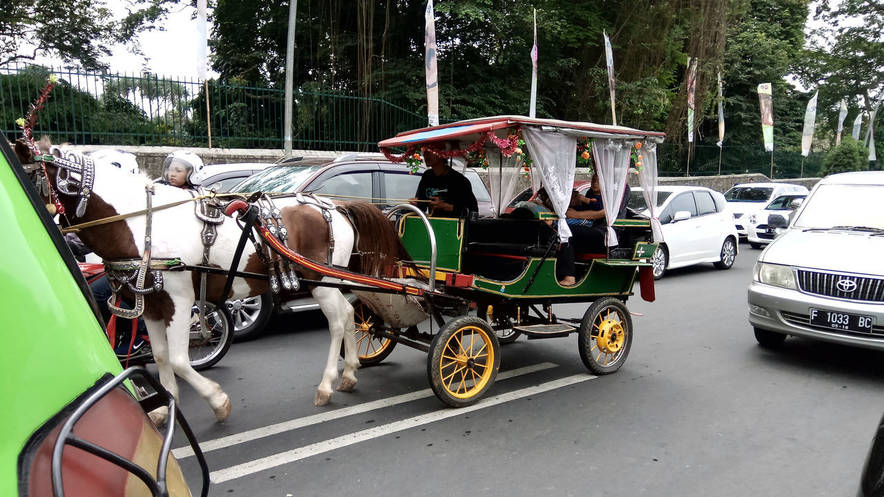 Andong among modern cars Architecture Car Day Horse Cart Land Vehicle Mammal Men Mode Of Transport Occupation Outdoors Real People Road Stationary Street Streetphotography Transportation Tree