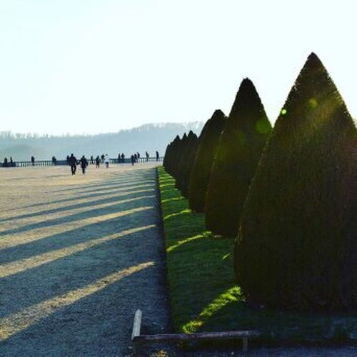 Trees Pinos Versalles,París People Green Winter Tourist Attraction