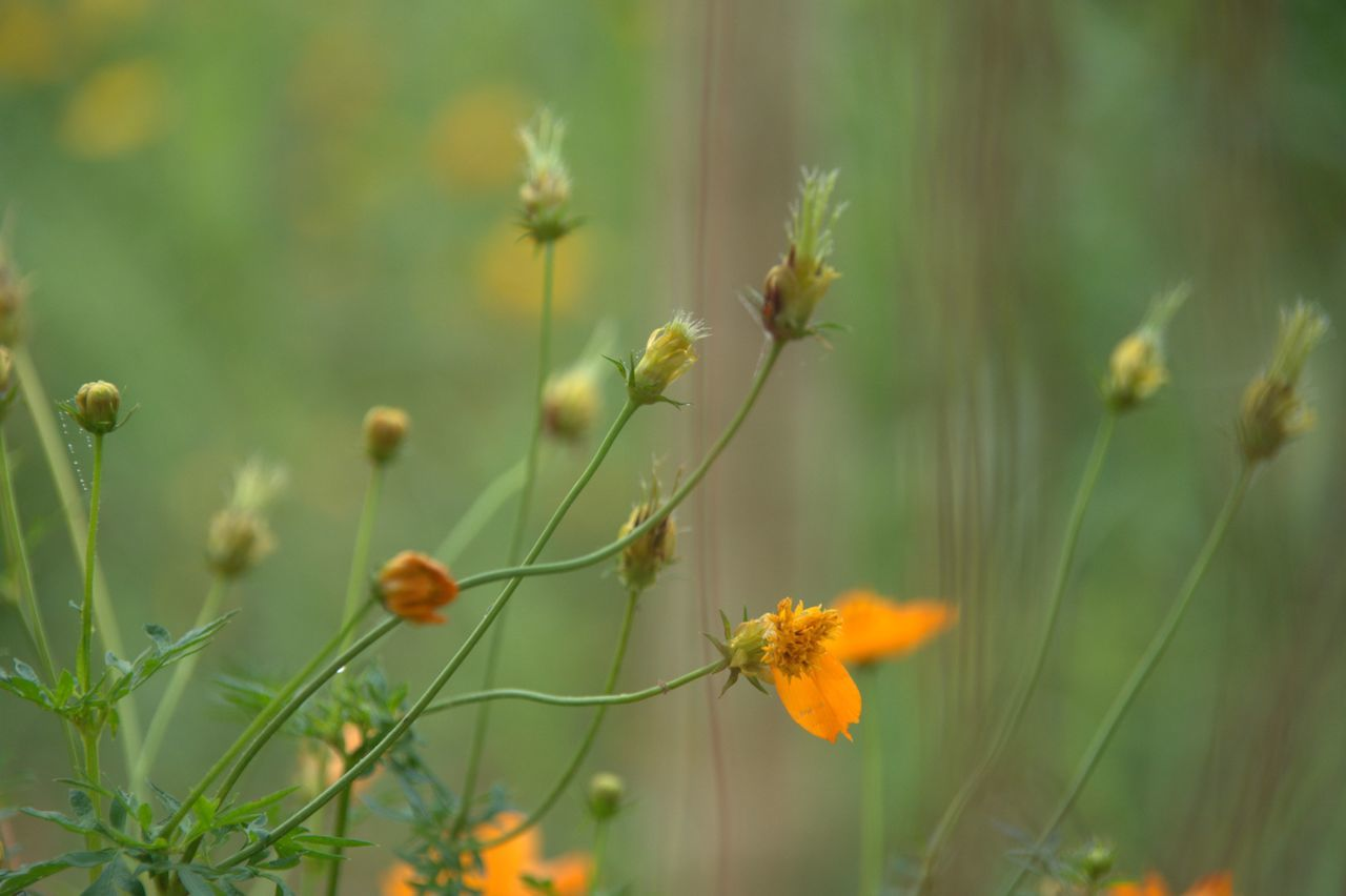 Blurs Botany Flower Flowers Growth Nature Plant Selective Focus Stem