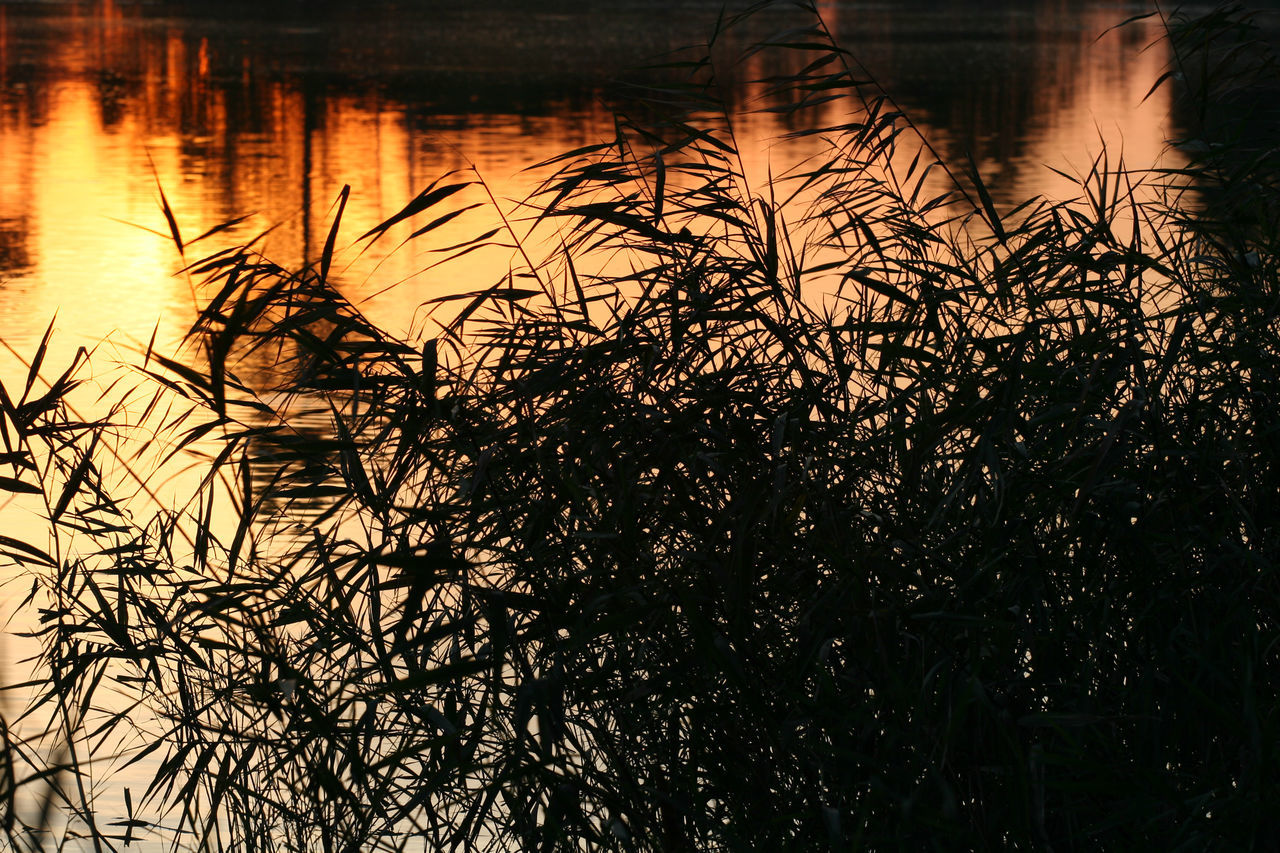 Beauty In Nature Cane Nature No People Outdoors Reeds Silhouette Sunset Tranquility Water