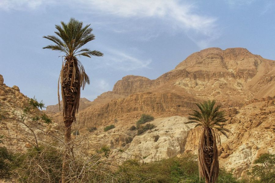 Desert Nature Reserve Palm Tree Beauty In Nature Day Desert Climate Dry Climate En Gedi Growth Israel Landscape Mountain Mountain Range Mountains Nature No People Oasis Outdoors Palm Tree Rough Climate Scenics Sky Tranquil Scene Tranquility Tree