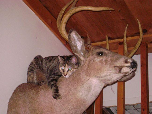 Domestic Animals Pets Animal Head  Animal Themes Animal Behavior